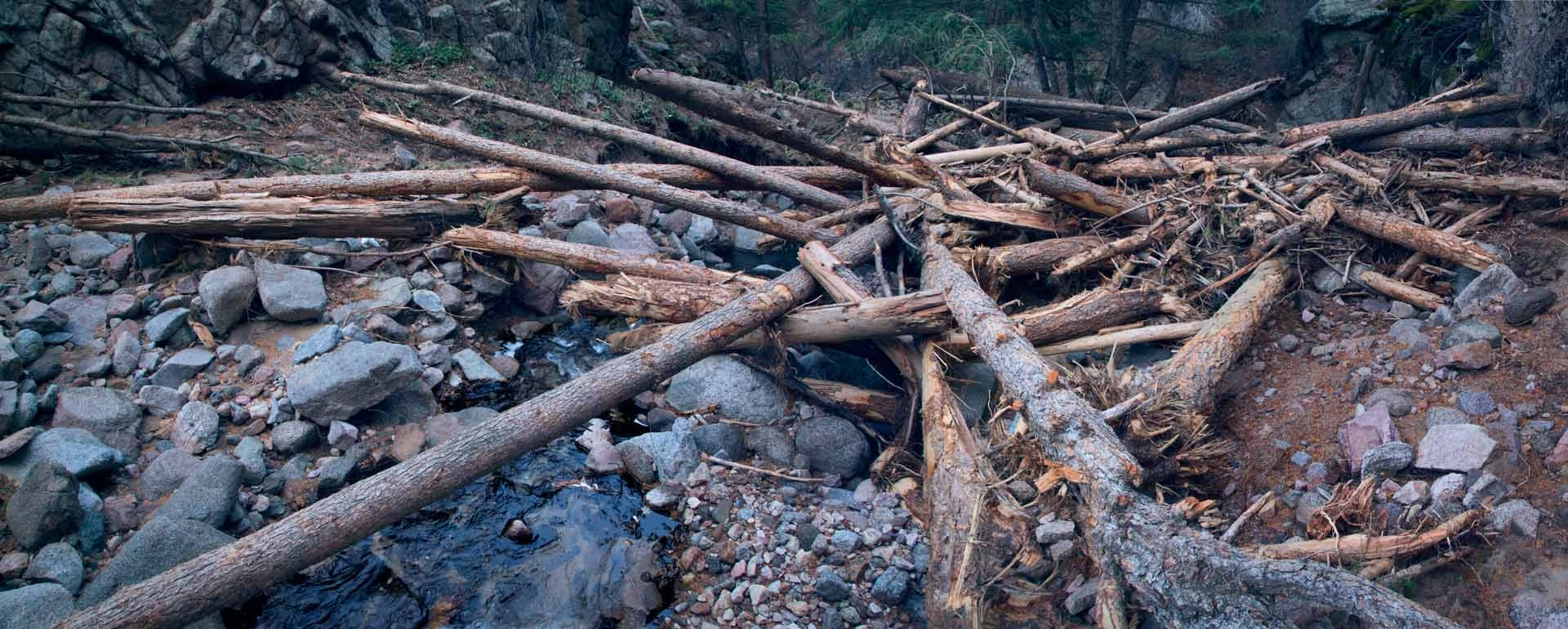 Habitat destruction essay