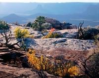 Slickrock Garden at Canyonlands Overlook