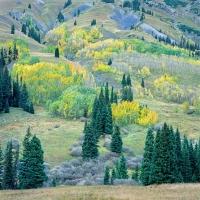 MEADOW MOUNTAIN, ELK MOUNTAINS, COLORADO