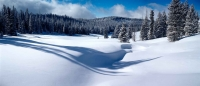 Snow Bird, Colorado