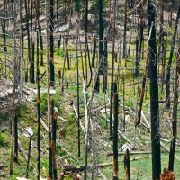 RECENTLY BURNED FOREST