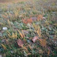 FALL GRASSES & SHRUBS