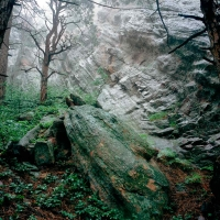 FERN CANYON & WET ROCKS