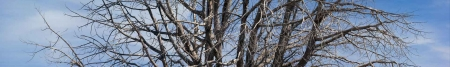 Horizontal Tree Slice